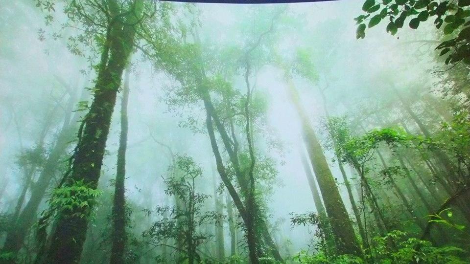 กิ่วแม่ปาน เชียงใหม่ หรือเส้นทางศึกษาธรรมชาติกิ่วแม่ปาน อยู่ในเขตอุทยานแห่งชาติดอยอินทนนท์
