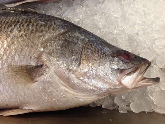 กินปลาแล้วฉลาด กับ 3 เมนูปลากะพง