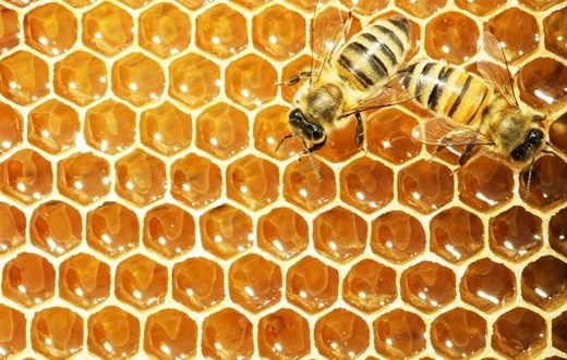 ข้อดีข้อเสียน้ำผึ้งป่ากับน้ำผึ้งเลี้ยง