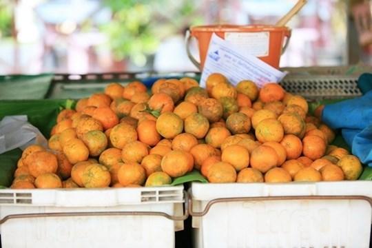 ส้มบางมด เป็นส้มสายพันธุ์ส้มเขียวหวาน อยู่ในกลุ่มส้มแมนดาริน
